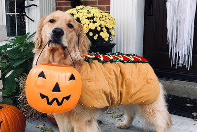 134 Halloween Dog Names