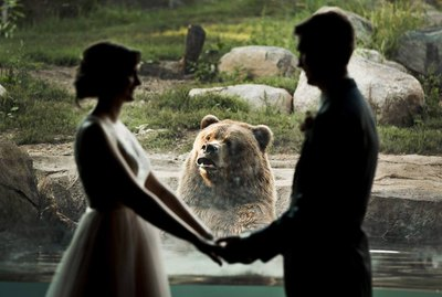 Wedding Nuptials Photobombed By Zoo Bear Prompt All The Jokes