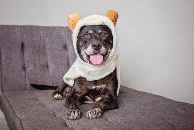 46 Animals Dressed As Other Animals For Halloween