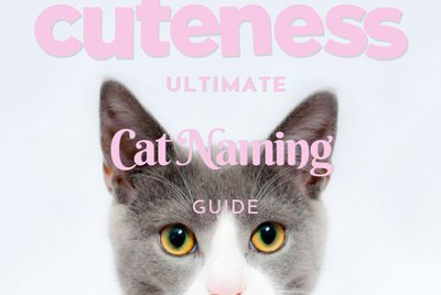 The Ultimate Guide to Naming Your Cat