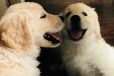 17 Dogs Discovering Mirrors For The First Time