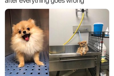 18 Funny Pet Memes To Make You Happy