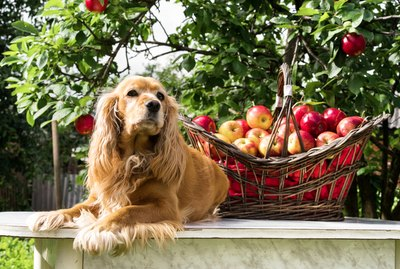 15 Dogs Who Are So Excited for Fall