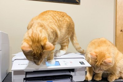 Cats Reacting To Printers Is Never Not Funny