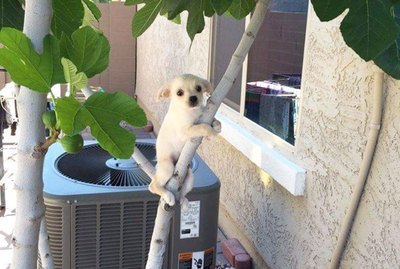 Just 20 Dogs Who Love to Climb Trees
