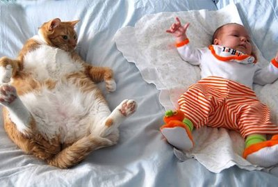 Just 18 Adorable and Funny Pet Pics