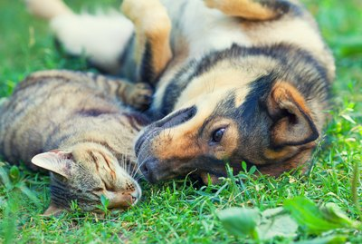 Are Dogs Better Friends Than Cats?