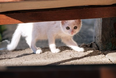 Can Cats & Dogs Predict Earthquakes?