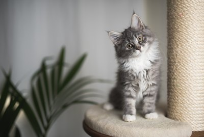 The Comprehensive Guide To Kitten-Proofing Your Home