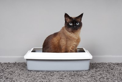 The 10 Best Natural Cat Litters For Your Natural Cat