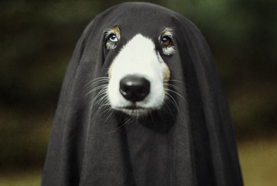 101 Horror Movie Names For Dogs