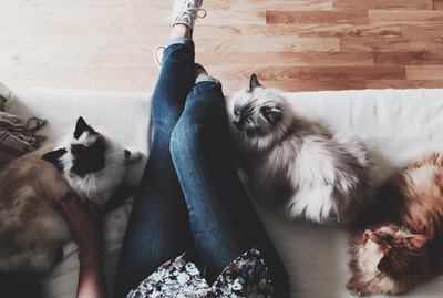 How to Keep The Peace in a Multi-Cat Household