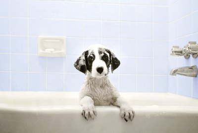 This Is The Best Way to Bathe a Dog, According to an Expert
