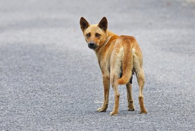 How to House-Train a Stray Dog