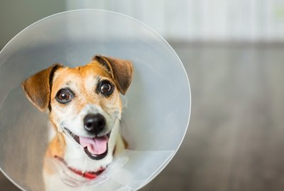 10 Dog Breeds With The Most Expensive Veterinary Bills