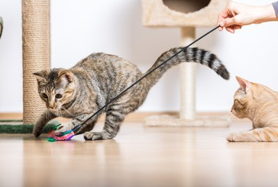 How Much Should You Play With Your Cat Each Day?