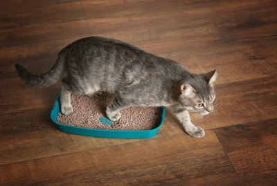 How to Choose The Best Type of Litter Box For Your Cat