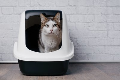 Why Won't My Cat Use Its Litter Box?