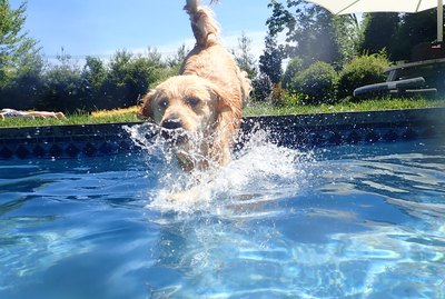 How to Introduce Your Dog to Swimming