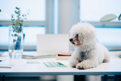 The Do's & Don'ts Of Bringing Your Dog To Work