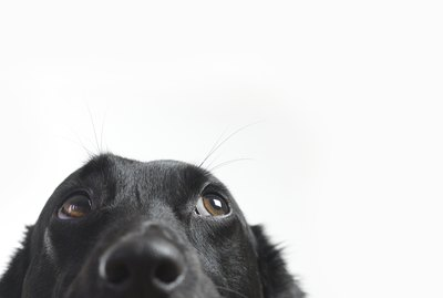 Can My Dog Really See Ghosts?