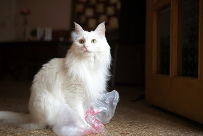 Why Are Cats Obsessed With Plastic Bags?