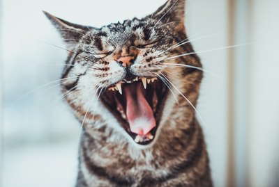 5 Fascinating Facts About Your Cat's Teeth