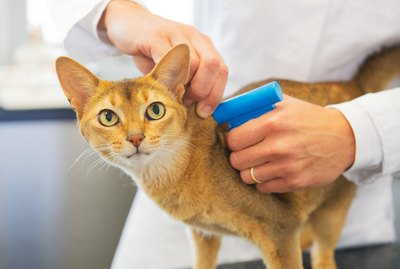 How Do Pet Microchips Work?