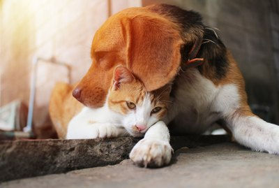 Can A Dog Fall In Love With A Cat?