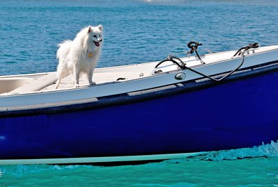 101 Nautical Dog Names