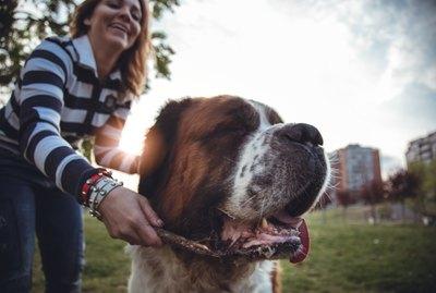 5 Dog Park Etiquette Rules You Should Never, Ever Break