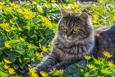 How To Safely Keep Cats Out of Your Garden
