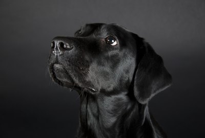 200 Names For Black Dogs
