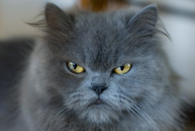 5 Things You're Doing That Make Your Cat Angry