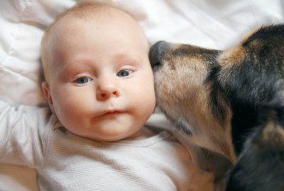Tips from the Trainer: Dogs and Babies