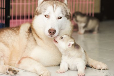 How Will the Male Dog React to the Newborn Puppies?