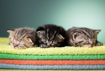 Everything You Need To Know About Feeding Your Kitten