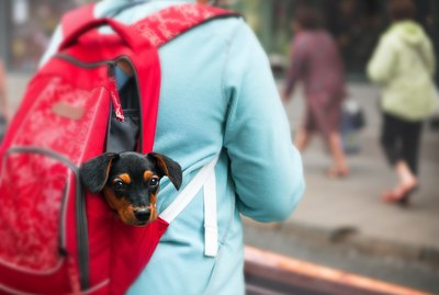 This Little Girl Who Was Caught Sneaking Her Puppy To School Is Our Hero