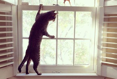 Why Do Cats Like to Climb?