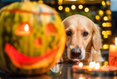 How to Give Your Cat or Dog a Safe and Happy Halloween