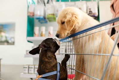 6 Stores You Never Knew Were Dog-Friendly
