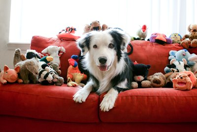 How to Apply the KonMari Method to Your Pet's Toys