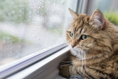 Does Weather Affect Cats' Moods?