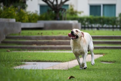 250 Unique & Unusual Dog Names