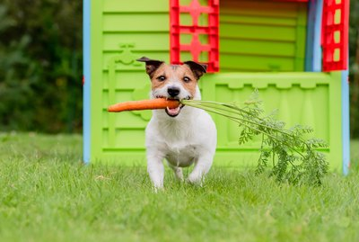 Good & Bad Vegetables for Dogs