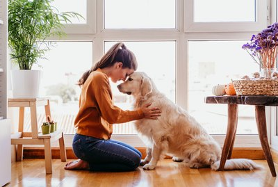 Should You Say Goodbye To Your Dog When You Leave The House?