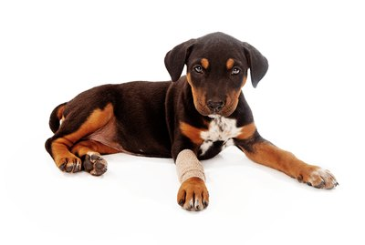 Care Tips For Pet Casts & Splints