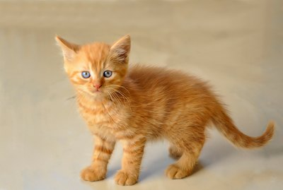 Cat Age Chart: How to Convert Cat Years Into Human Years
