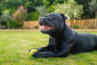 What is Your Dog's Body Language Telling You?