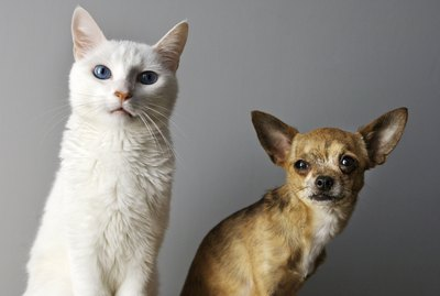 Are Cats Smarter Than Dogs?